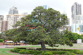 nice-tree