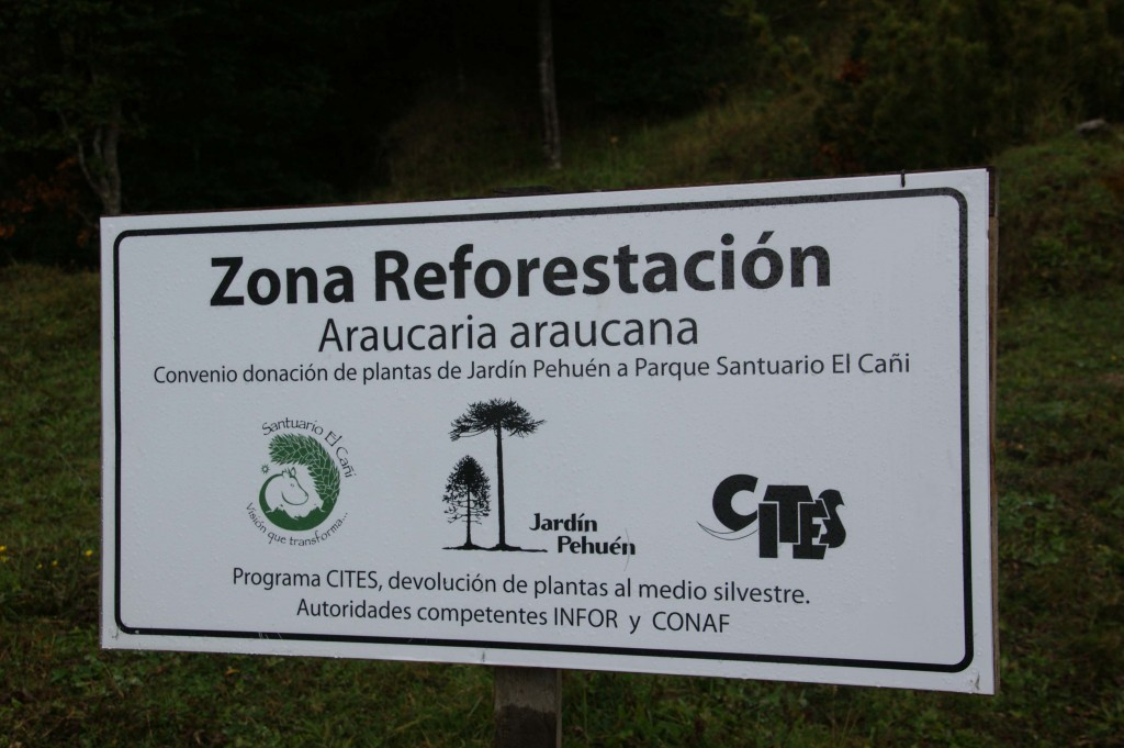 Reforestation works on a global scale.