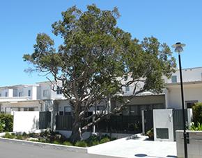 home-tree2